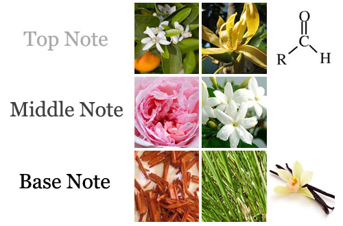 CHANEL 5 notes